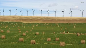 A wind farm generates electricity near bales of hay in the foothills of the Rocky Mountains near the town of Pincher Creek, Alberta September 27, 2010. The non-polluting source of renewable energy is fed into the provincial electrical grid that powers Southern Alberta industries and residences. REUTERS/Todd Korol (CANADA - Tags: ENVIRONMENT BUSINESS ENERGY IMAGES OF THE DAY)