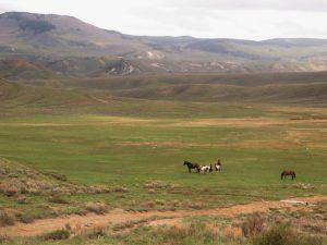 Brinker Creek Ranch 2